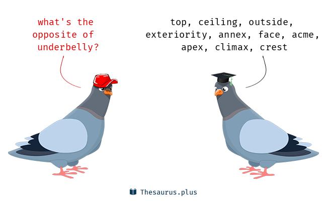 25 Underbelly Antonyms  Full list of opposite words of