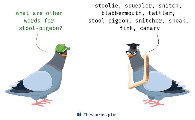 Synonyms for stool-pigeon