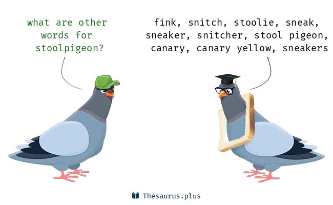 Synonyms for stoolpigeon