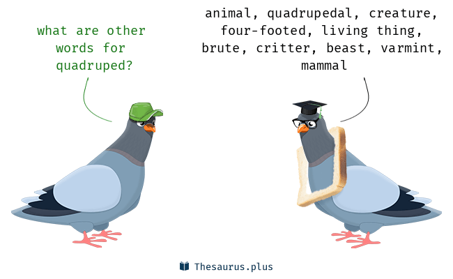 Synonyms for quadruped